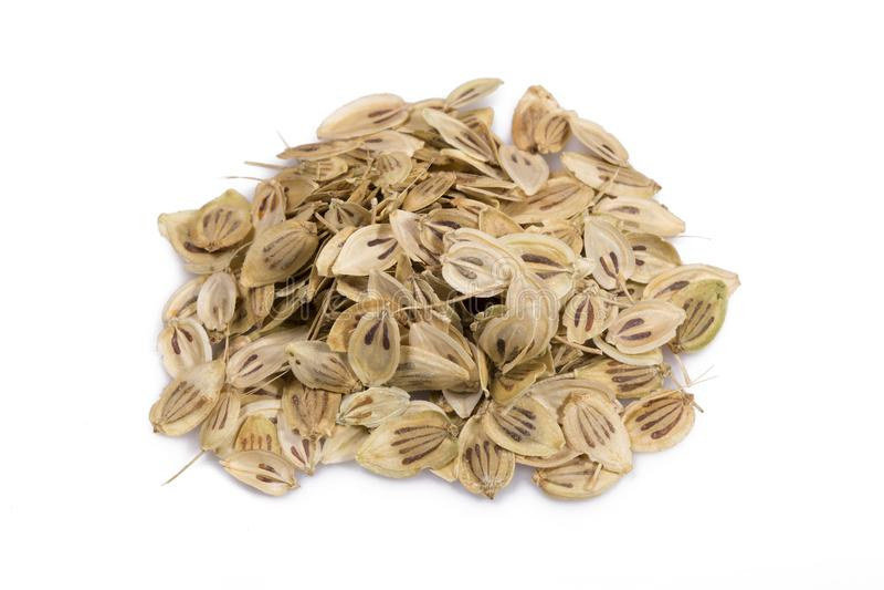 Angelica Seeds lizenzfreies stockbild