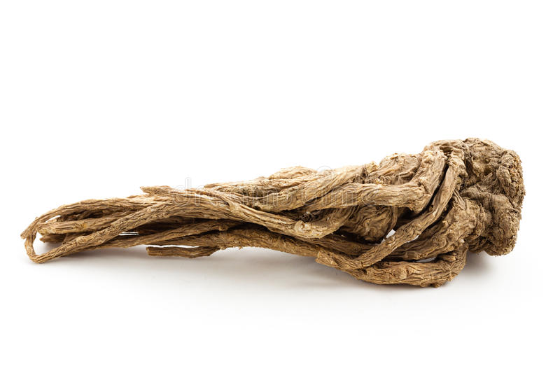 Angelica sinensis(Traditional Chinese Medicine) royalty free stock photo