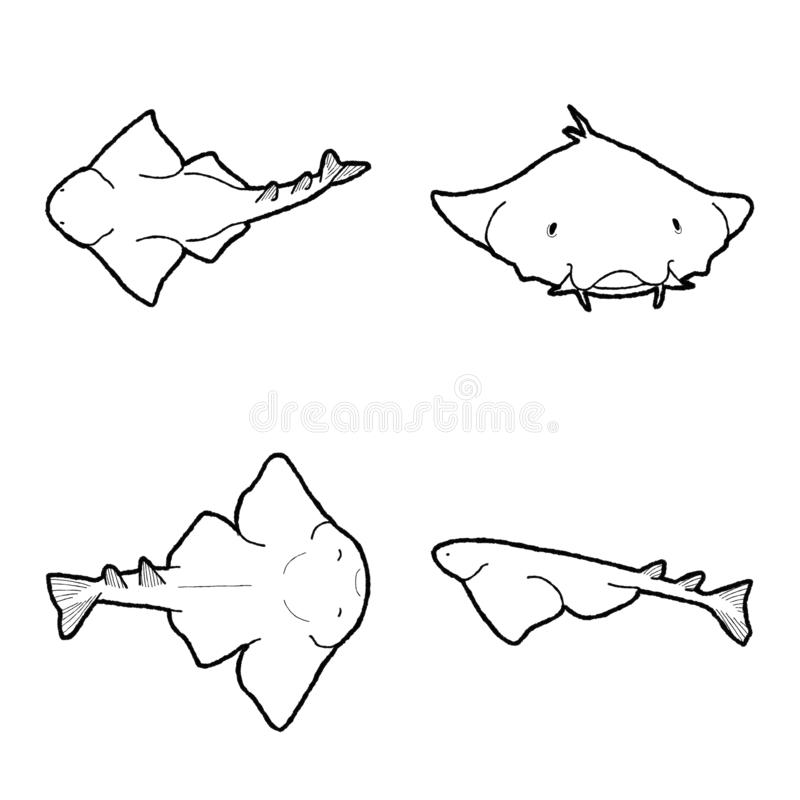 Angelshark Vector Illustration Hand Drawn Animal Cartoon Art. Angelshark Vector Pencil Illustration Hand Drawn Animal Cartoon Art stock illustration