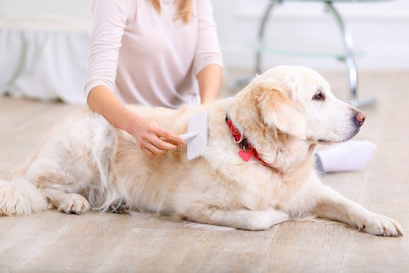 Angenäm kvinna som har gyckel med en hund royaltyfria foton