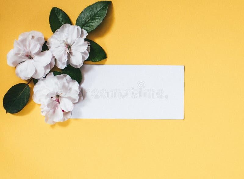 Angeredete weibliche Ebene legen auf blassen Pastellhintergrund, Draufsicht lizenzfreie stockbilder