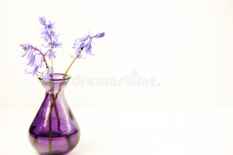 Angeredetes Blumenbild auf Lager lizenzfreie stockbilder