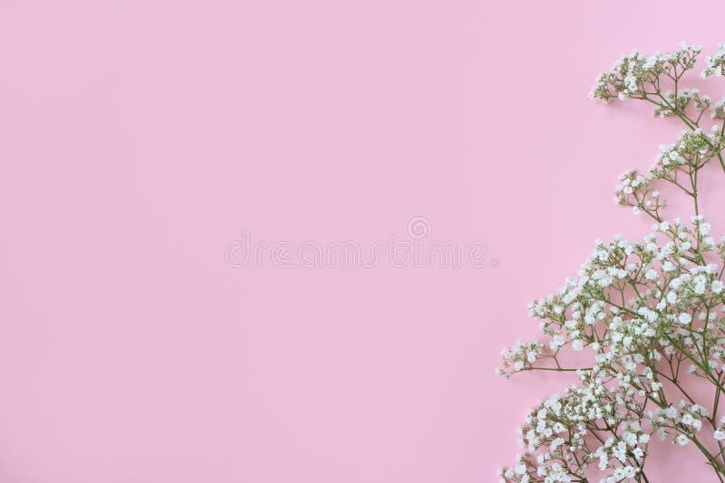 Angeredetes Foto auf Lager Weibliche Hochzeit, Geburtstagstischplattenmodell mit Baby ` s Atem Gypsophila blüht Rosa Hintergrund lizenzfreie stockfotos