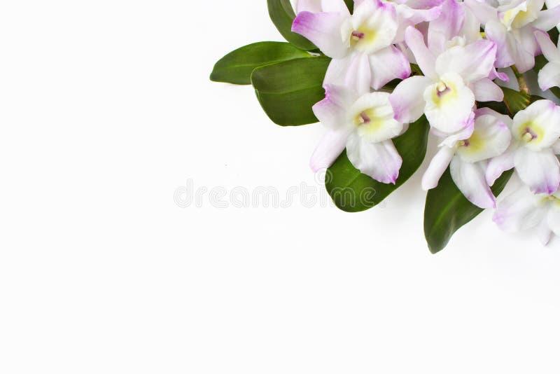 Angeredetes Foto auf Lager Weibliche Tischplattenszene Dendrobiumorchideenblumen auf weißem Tabellenhintergrund Leerer Raum flora lizenzfreie stockfotos