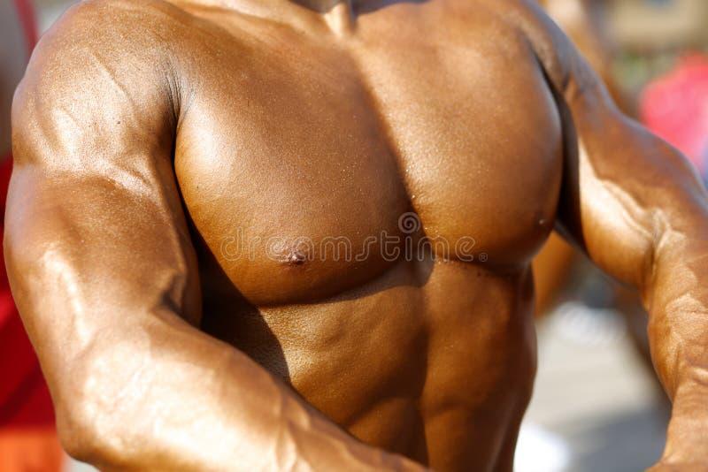 Angespannte Muskeln lizenzfreie stockbilder