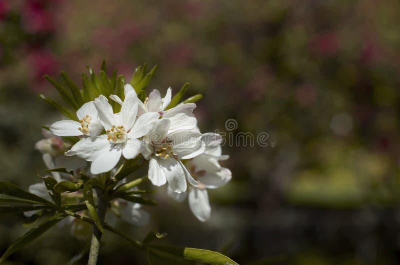 Download Angestrahlte Blumen stockbild. Bild von scheinwerfer, punkt - 850097
