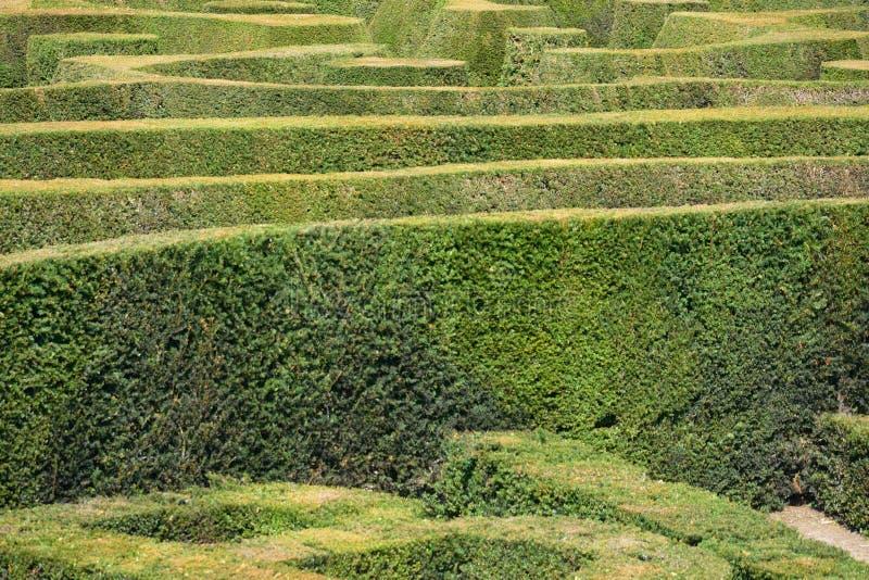 Angielski żywopłotu labirynt zdjęcie royalty free
