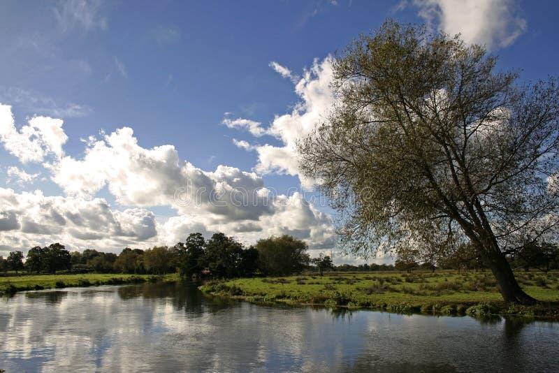 angielski meadow rzeka Surrey wey zdjęcie stock