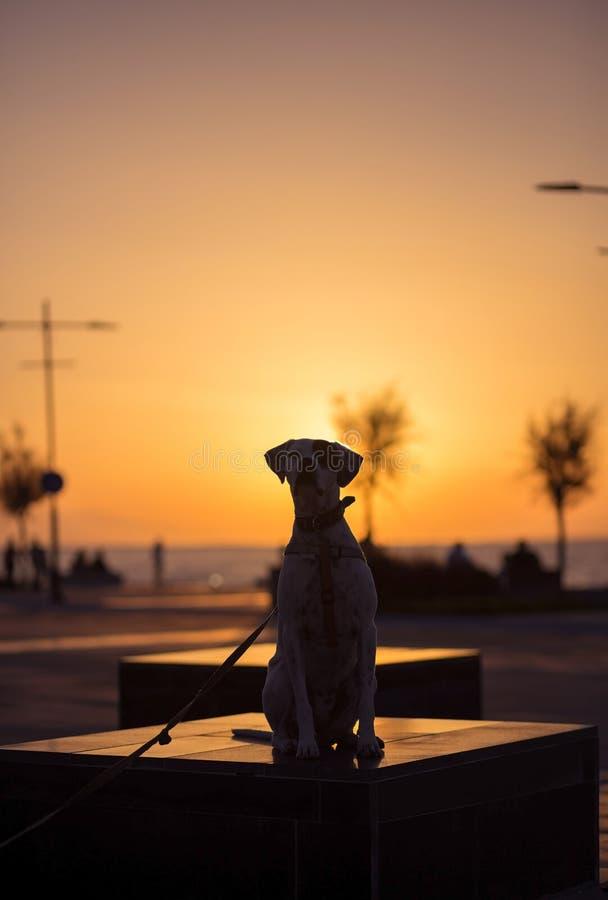 Angielski pointer mieszanki fenotypu pies na zmierzchu zdjęcie royalty free