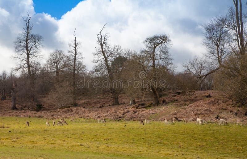 Angielski wiosna lasu las zdjęcia royalty free