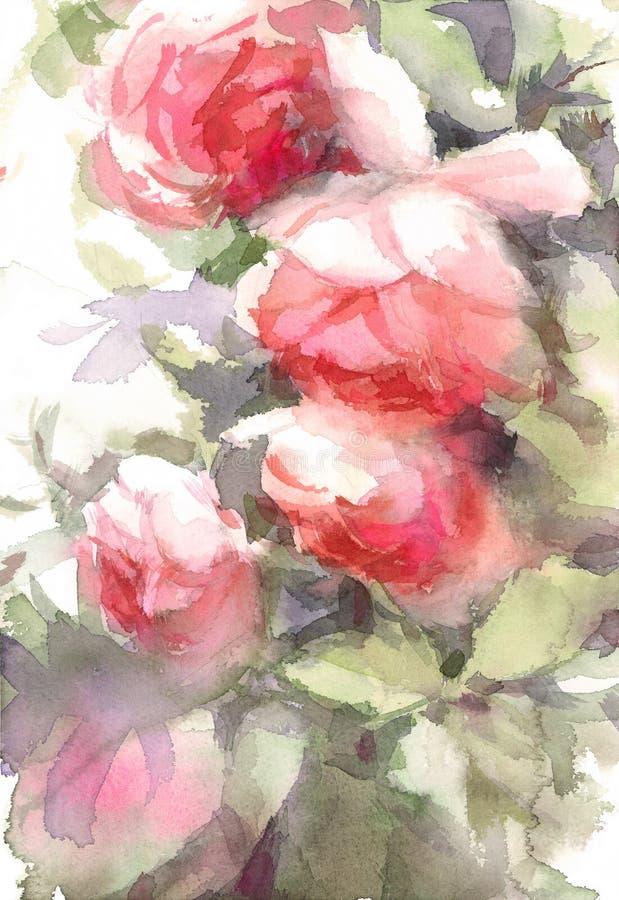 Angielszczyzny Uprawiają ogródek róży akwareli kwiatów Ilustracyjną rękę Malującą ilustracji