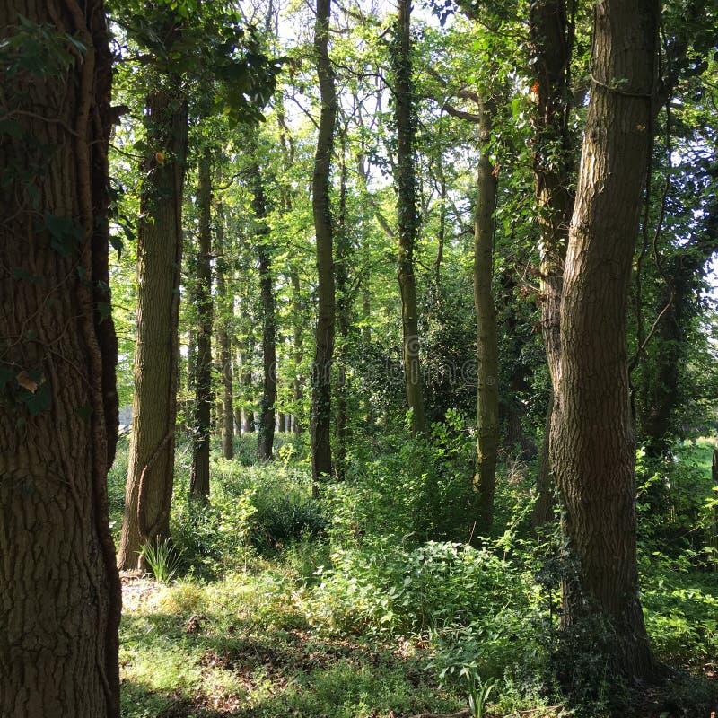 Angielszczyzny Wyrzucać na brzeg Drzewnego las obraz stock