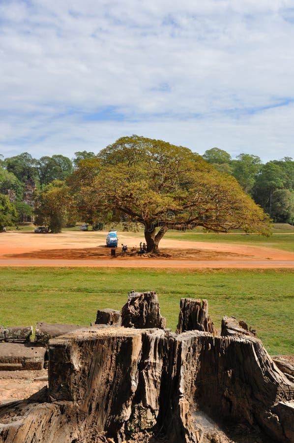 angkor大中间thom结构树 库存照片