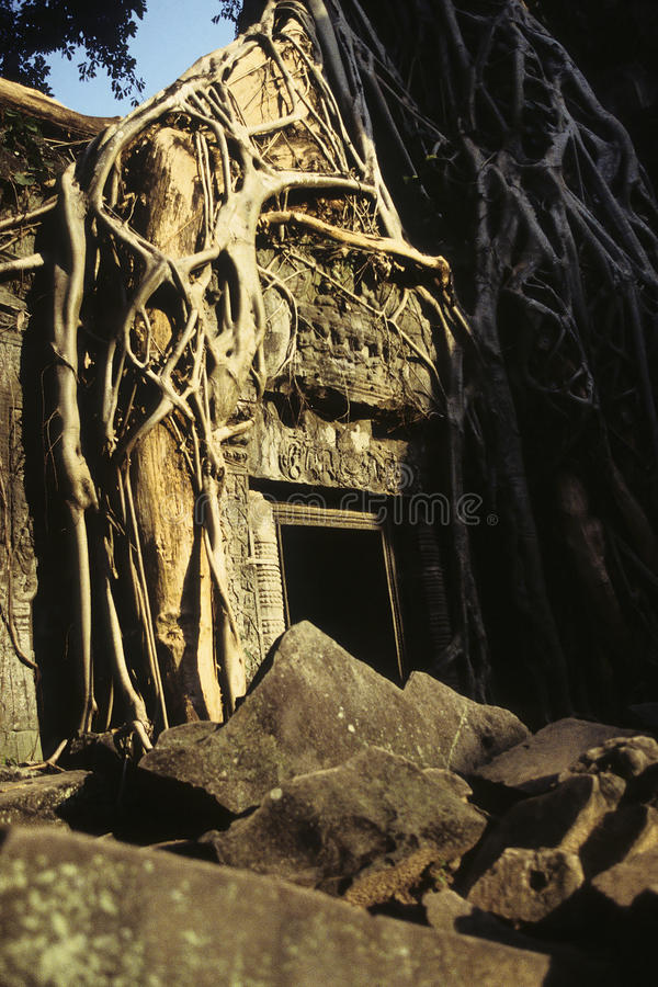 angkor柬埔寨破坏wat 图库摄影