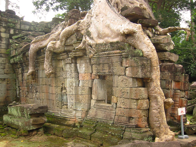 angkor柬埔寨长满的寺庙wat 库存照片