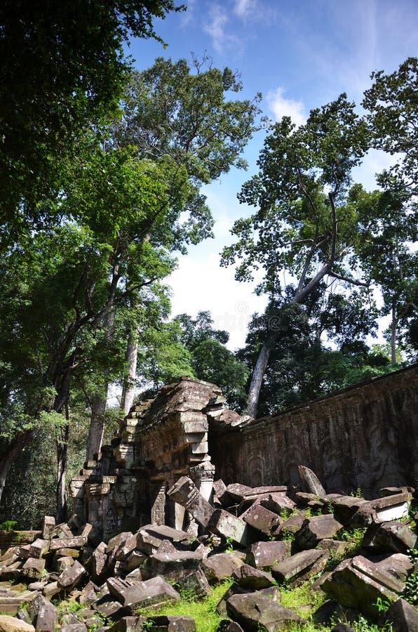 angkor柬埔寨prohm ta寺庙 库存图片