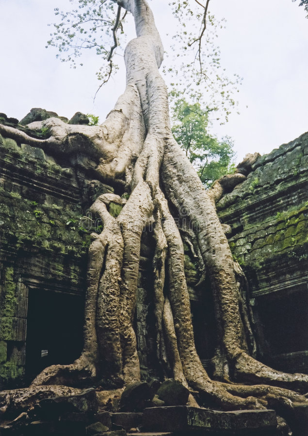 angkor长满的破庙wat 免版税图库摄影