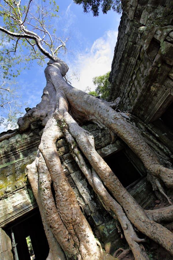 Angkor images libres de droits