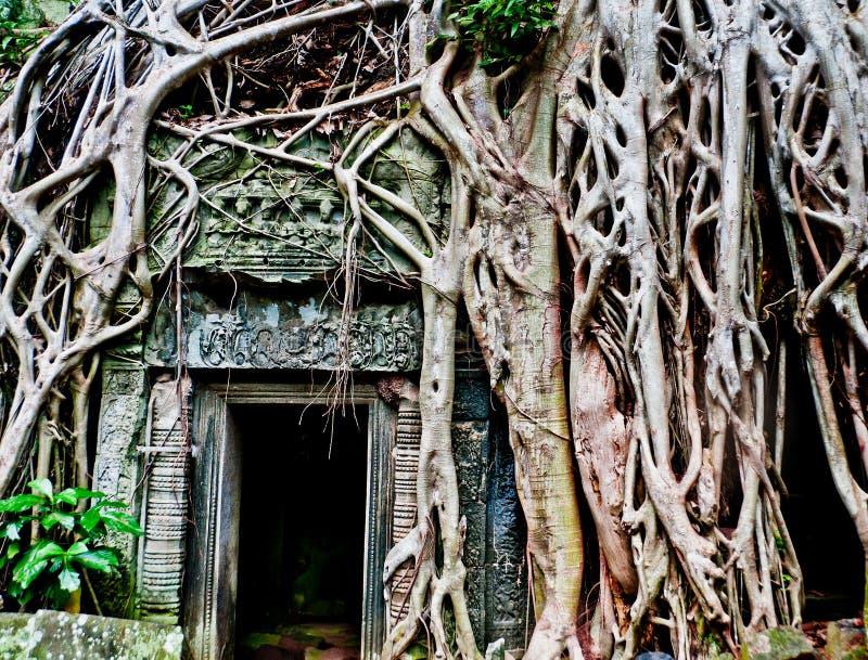 Angkor fördärvar royaltyfri bild