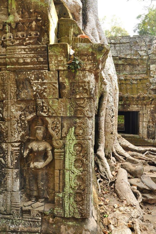 Angkor, Kambodja Khmer de tempelruïnes van Ta Prom stock afbeelding