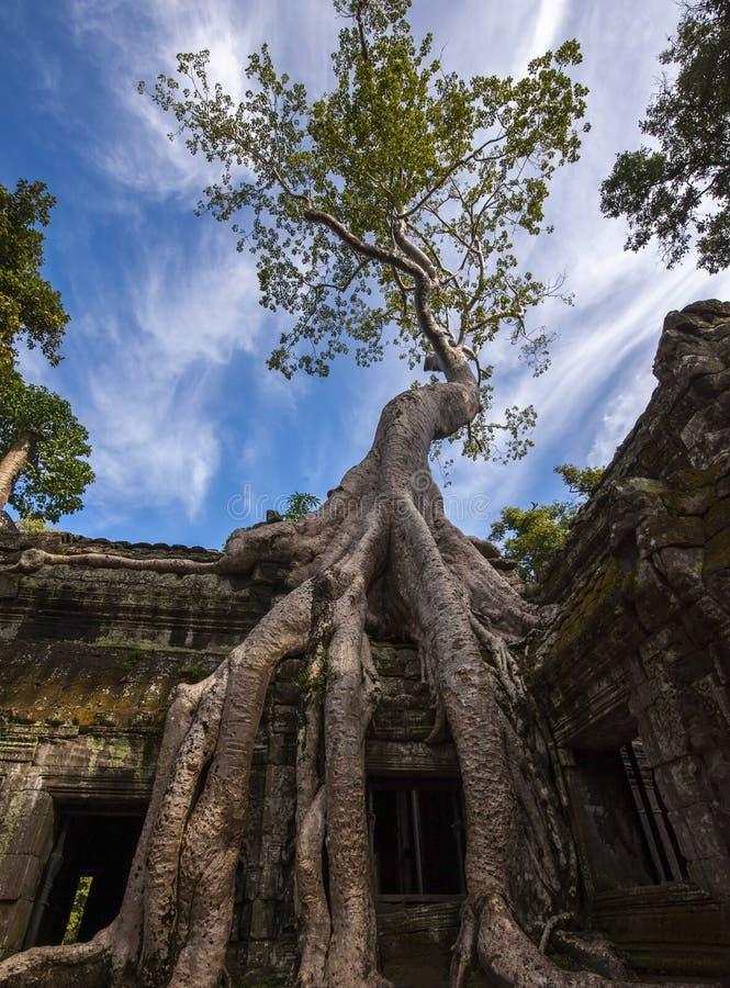 Angkor Ta Prohm em Camboja foto de stock