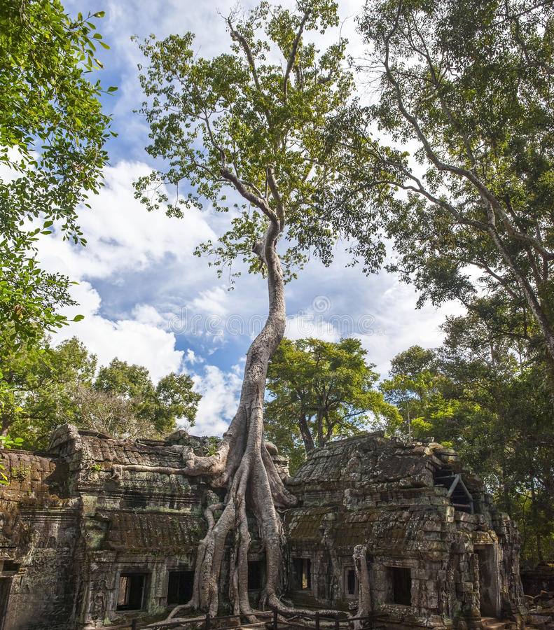Angkor Ta Prohm em Camboja fotografia de stock