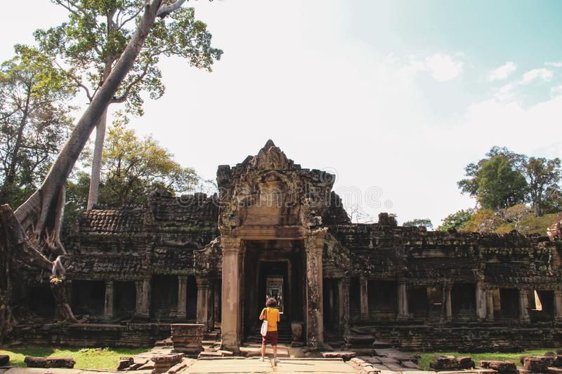Angkor Temples in Siem Reap, Cambodia. Ancient Angkor Temples and banyan trees in Siem Reap, Cambodia royalty free stock photography