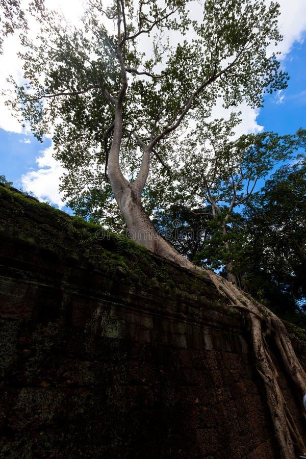 Angkor Thom, Cambogia fotografia stock libera da diritti