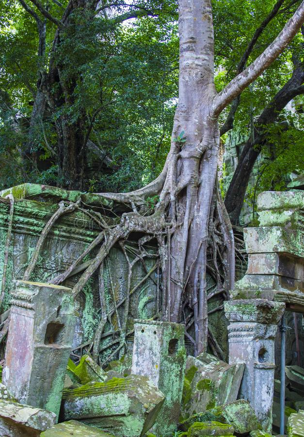 Angkor Thom Kambodża obraz royalty free