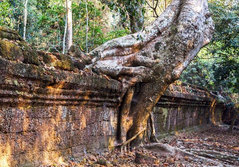 Download Angkor Vat, Complexe De Temple De Khmer, Asie Siem Reap, Cambodge Image stock - Image du indochine, bouddhisme: 56476647