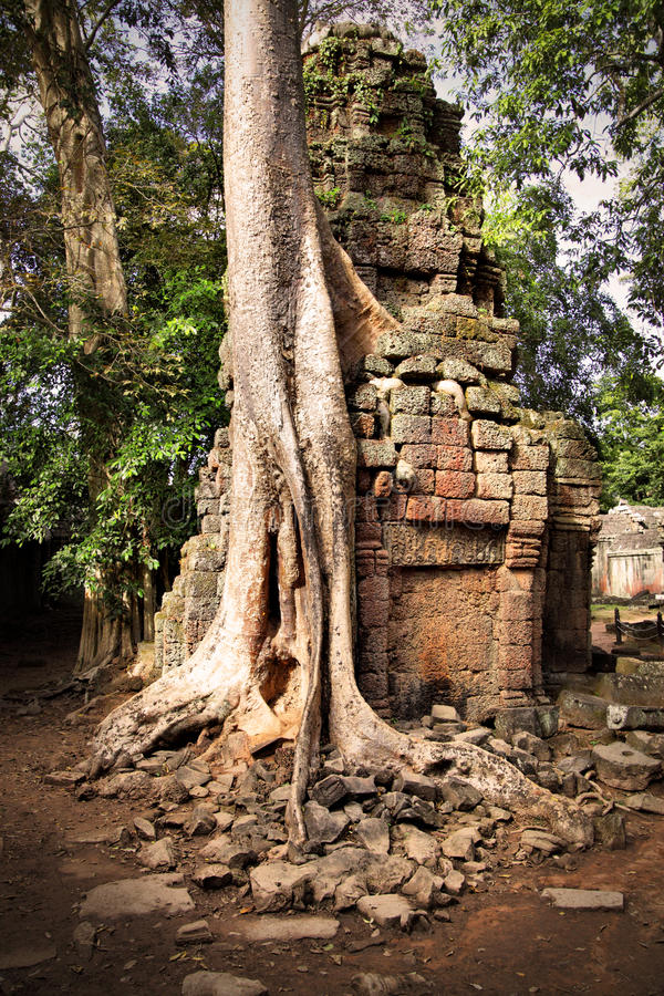 Download Angkor Wat stock photo. Image of ancient, forest, architecture - 22504810