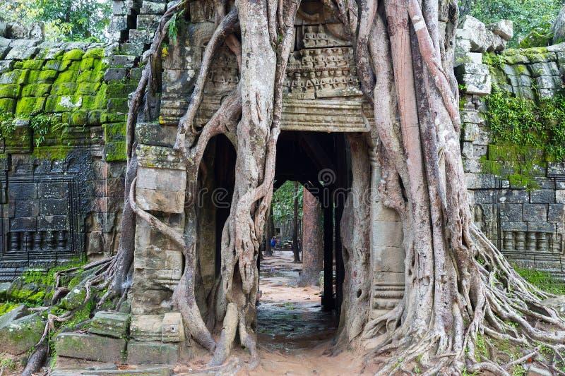 Angkor Wat стоковые изображения