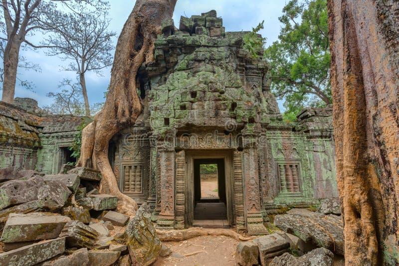 Angkor Wat Cambodia Templo budista antigo do Khmer de Ta Prohm imagem de stock