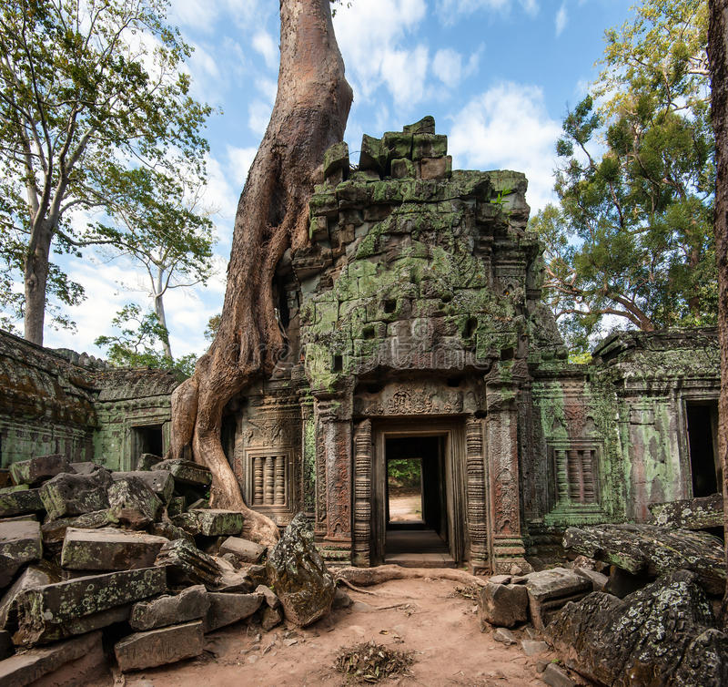 Angkor Wat Camboya Templo budista antiguo del Khmer de TA Prohm foto de archivo