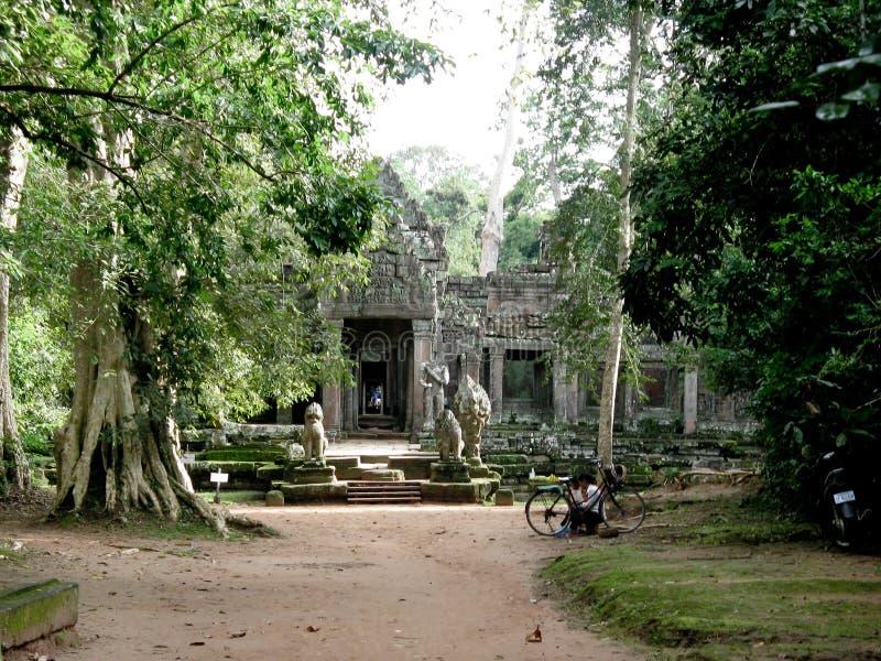 Angkor Wat giant trees royalty free stock image
