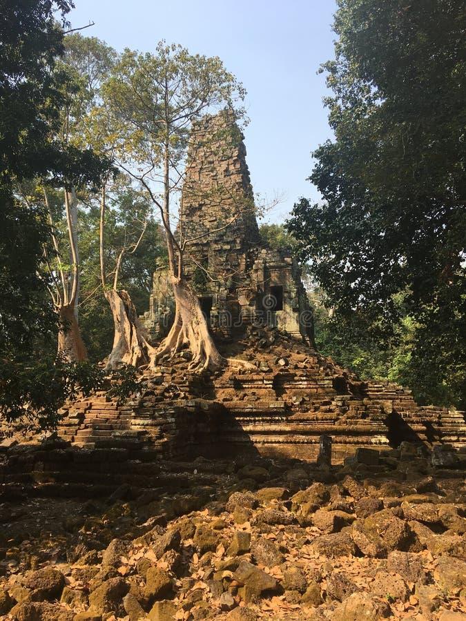 Angkor Wat i Siem Reap, Cambodia Forntida fördärvar av templet för den Preah Palilay en khmerstenen som är bevuxen med, rotar och arkivfoto