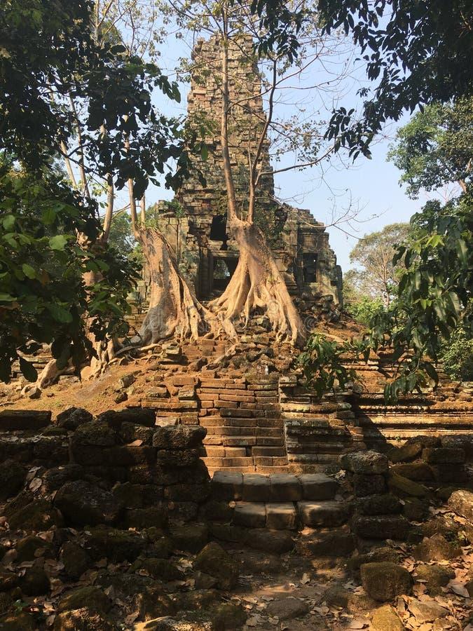 Angkor Wat i Siem Reap, Cambodia Forntida fördärvar av templet för den Preah Palilay en khmerstenen som är bevuxen med, rotar och royaltyfri fotografi