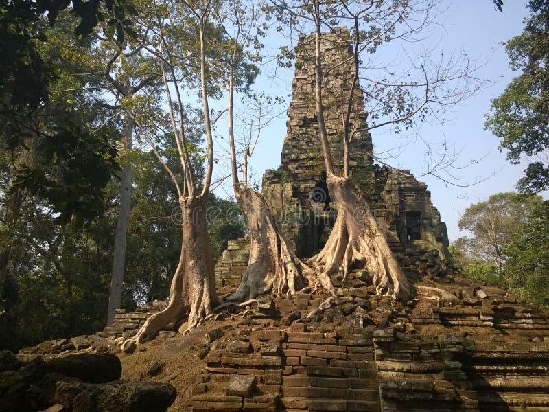 Angkor Wat i Siem Reap, Cambodia Forntida fördärvar av templet för den Preah Palilay en khmerstenen som är bevuxen med, rotar och royaltyfri foto
