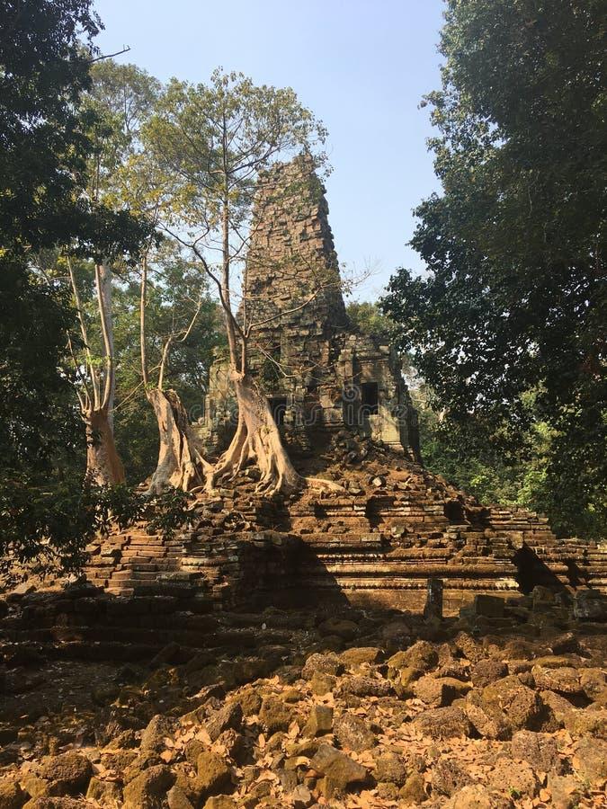 Angkor Wat i Siem Reap, Cambodia Forntida fördärvar av templet för den Preah Palilay en khmerstenen som är bevuxen med, rotar och fotografering för bildbyråer