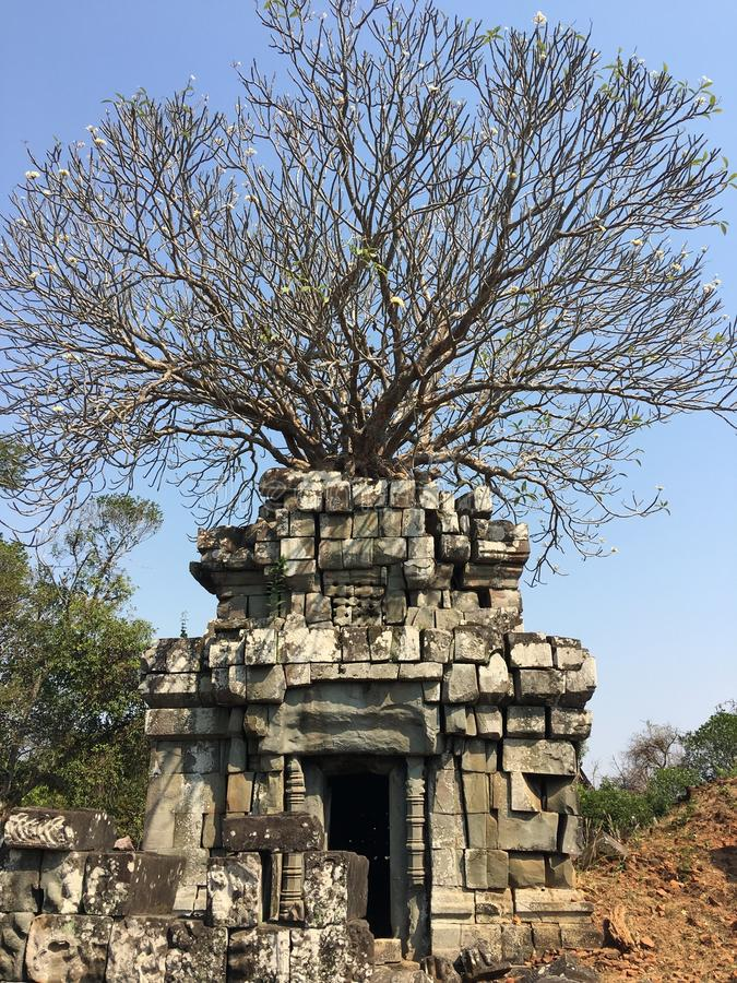 Free Angkor Wat In Siem Reap, Cambodia. Ancient Ruins Of Khmer Stone Temple Overgrown With The Roots And Giant Strangler Fig Trees Royalty Free Stock Photo - 110536505