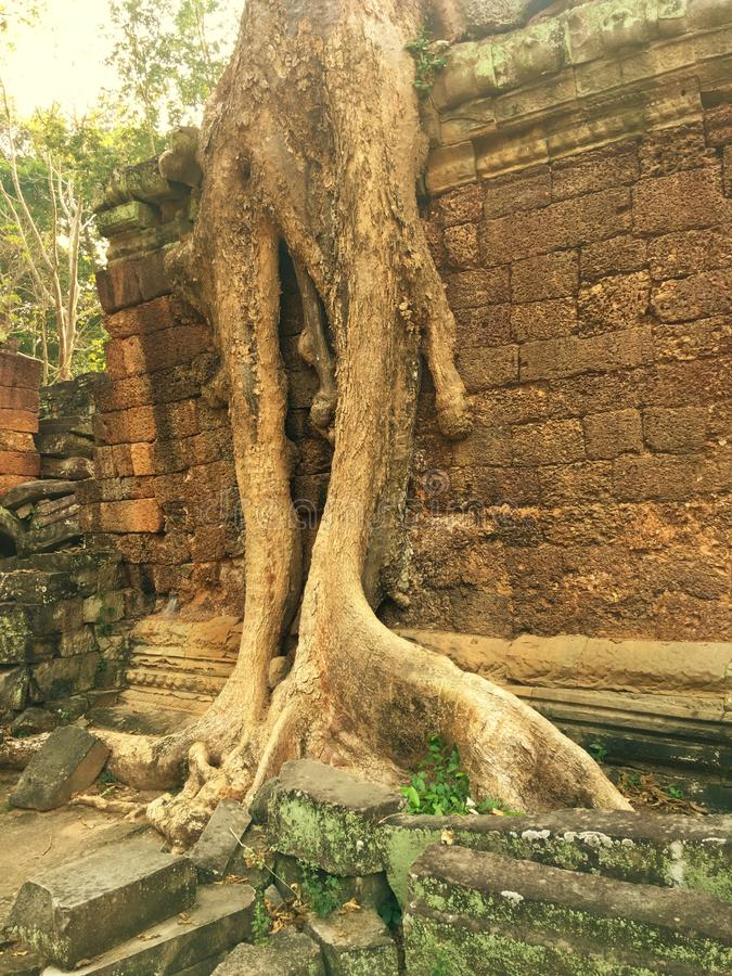 Free Angkor Wat In Siem Reap, Cambodia. Ancient Ruins Of Khmer Stone Temple Overgrown With The Roots And Giant Strangler Fig Trees Stock Images - 110537964