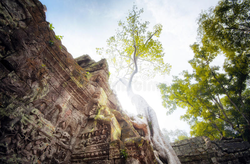 Angkor Wat Kambodja De Khmer oude Boeddhistische tempel van Ta Prohm stock foto