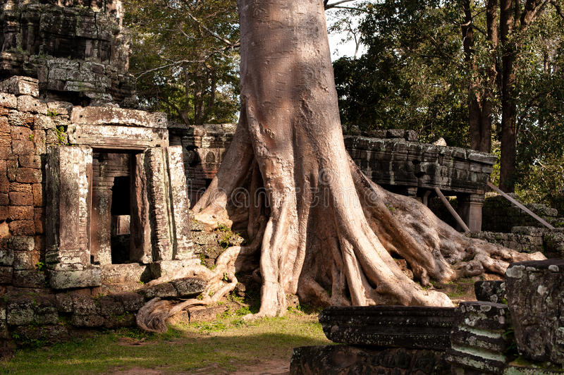 Angkor Wat - ochtendlicht stock foto