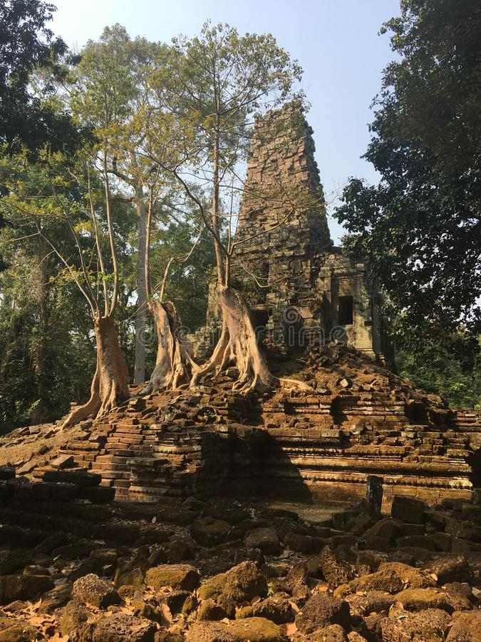 Angkor Wat in Siem Reap, Cambodia. Ancient ruins of Preah Palilay Khmer stone temple overgrown with the roots and giant trees royalty free stock photos