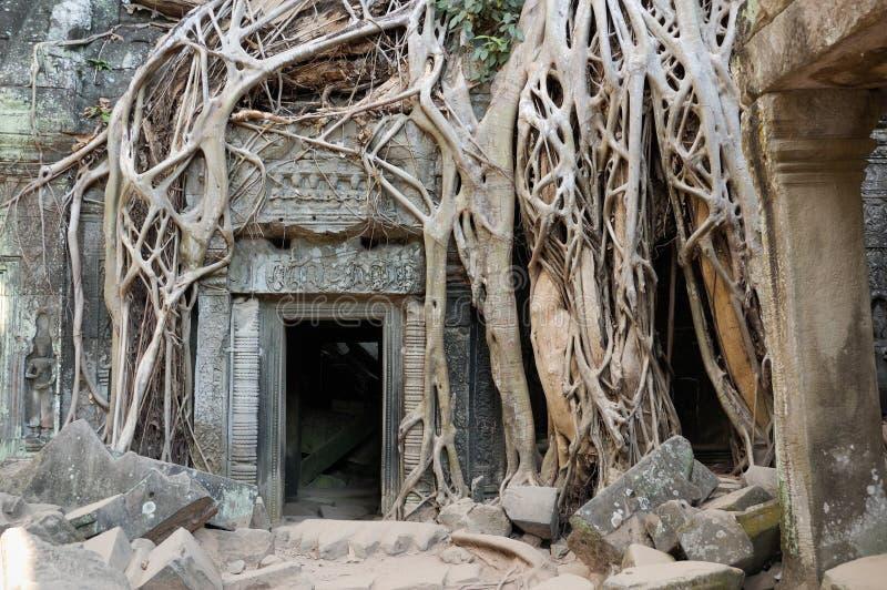 Angkor Wat - Tempel Ta-Prohm lizenzfreies stockfoto