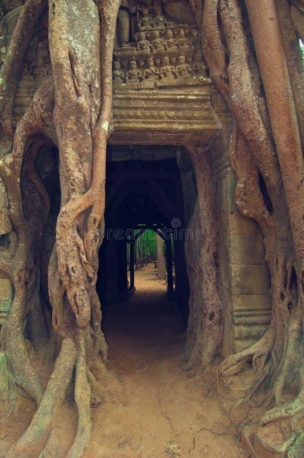 angkorbanyandörr över wat för somta-tree arkivbild
