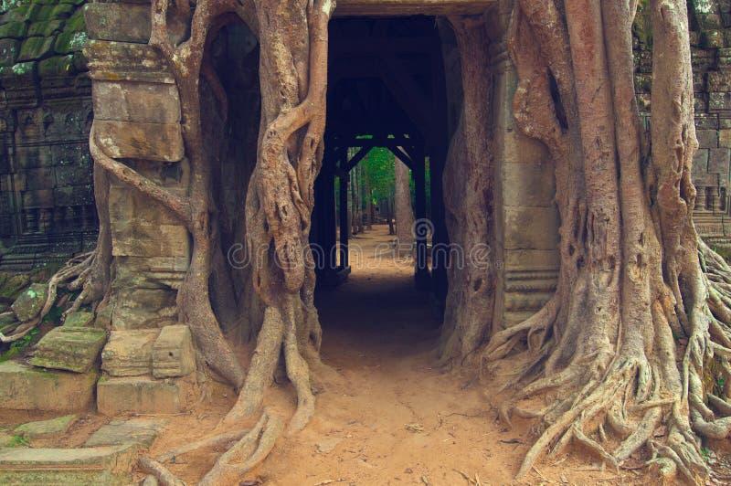 angkorbanyandörr över wat för somta-tree arkivfoto