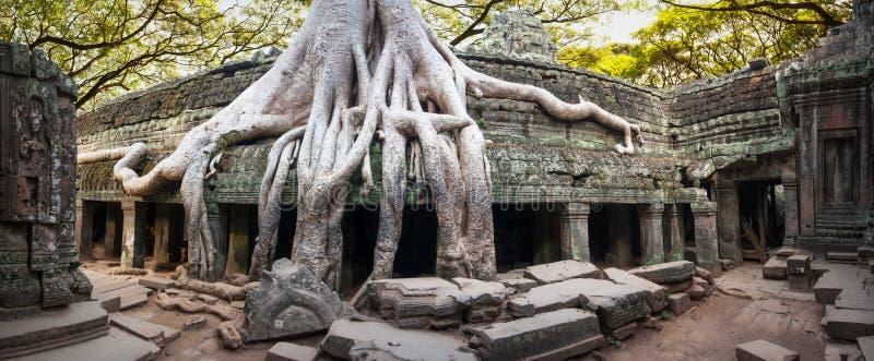angkorcambodia wat Tempel för en khmer för Ta Prohm forntida buddistisk royaltyfri foto