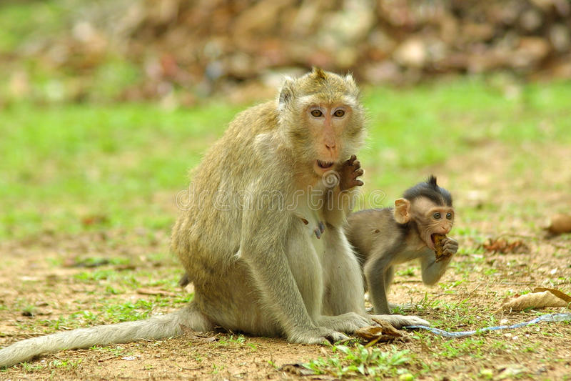 angkoren cambodia härmar nationalparkwat royaltyfria foton