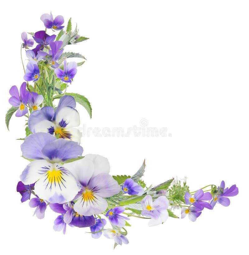 Angle de fleurs lilas claires de Pansy isolées en blanc photo stock